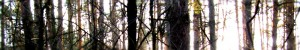 3waldbar
